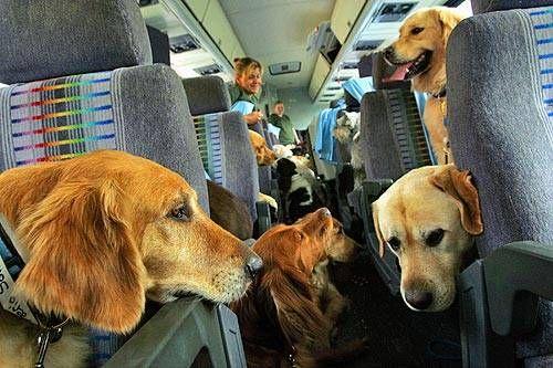 Стоимость билета на перевозку собаки самолетом купить авиабилеты дешево в симферополе