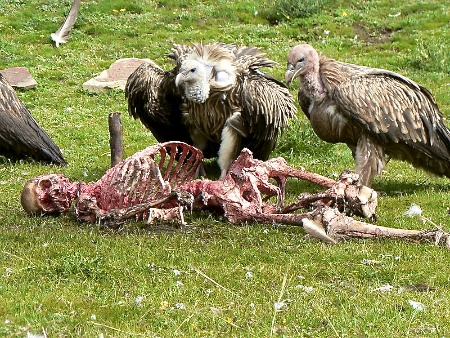 https://mirputeshestvii.ru/uploads/images/publications/sky_burial/skyburial2.jpg